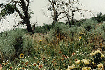 native flora near the Cimarron River